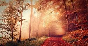 Nature, Landscape, Fall, Forest, Mist, Path, Dirt, Road, Sunrise, Sunlight, Red, Leaves, Trees