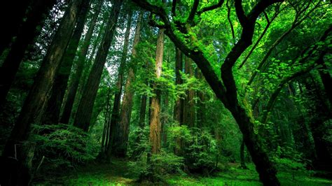 Green Forest Image by Hd Green Forest Wallpaper Hd Wallpapers Pulse