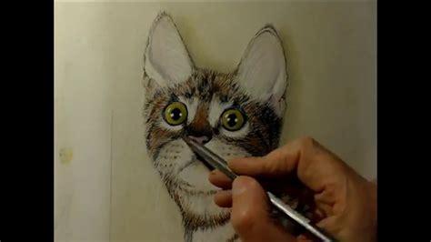 gatto disegnato  matite colorate youtube