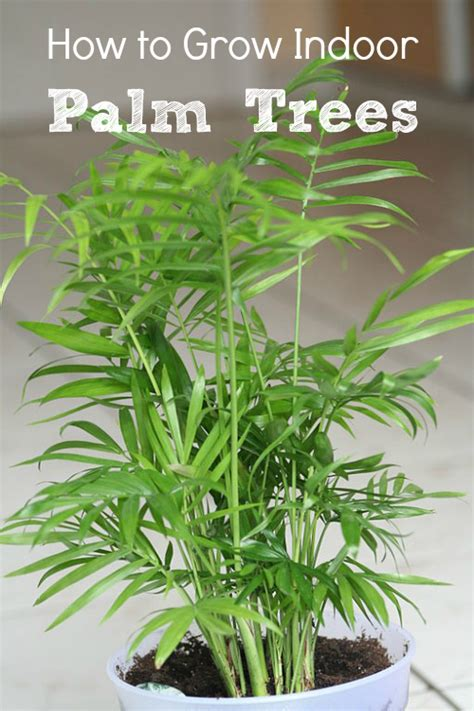 grow ls for indoor plants indoor palm trees types how to grow them install it