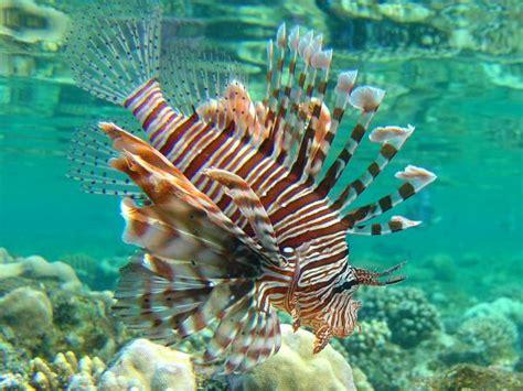 wir schnorchelnde unterwasserbilder aegypten moevenpick