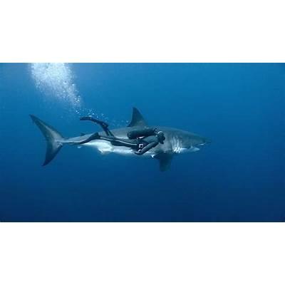 Great White SharkTracking Sharks