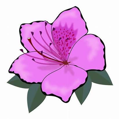 Flower Clip Clipart Flowers Flor Graphics Detailed