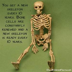Bone Facts