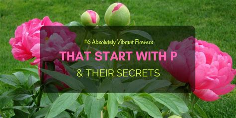 flowers start with a 6 absolutely vibrant flowers that start with p their secrets