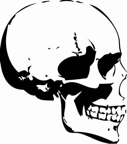 Skull Side Human Profile Drawing Skulls Clipart