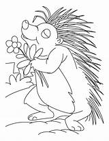 Porcupine Coloring Printable Animal Flower Loving Sheets Clipart Template Printables Lesson Library Popular sketch template