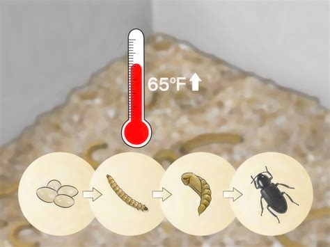 how to care for mealworms 9 steps with pictures wikihow
