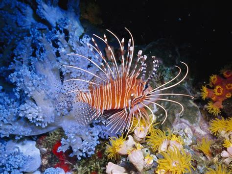 saltwater fish compatibility  aquarium setup