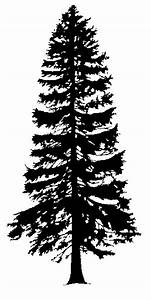 Western Red Cedar Silhouette | Trees | Pinterest
