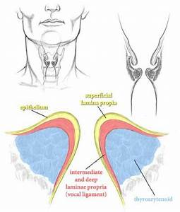 Vocal Folds Diagram   The voice, Voice therapy, Singing ...