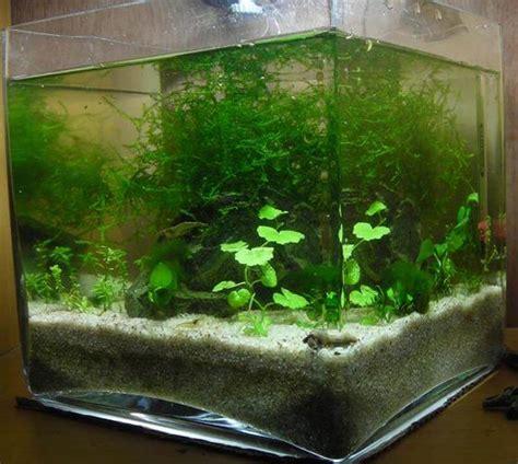 les modeles des cuisines marocaines poissons pour nano aquarium eau douce 28 images achat