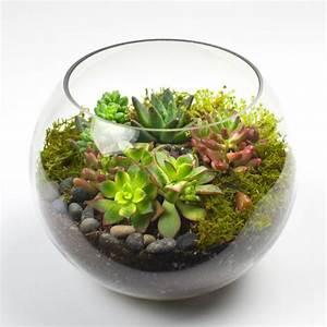 Cómo construír un terrario para plantas con material reciclado (mini invernadero)