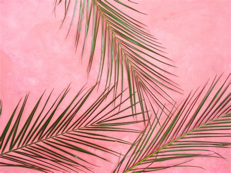 Abstract Creativity Black And White Wallpaper by Wallpaper Palm Tree Branches Pastel Leaves Minimalism
