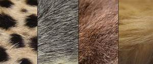 Fu R : the meaning and symbolism of the word fur ~ Orissabook.com Haus und Dekorationen