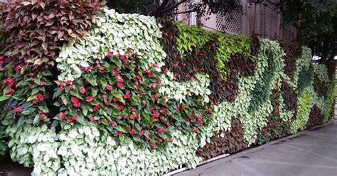 Plants For Vertical Gardens by Living Green Walls India Should Look To Vertical Gardens