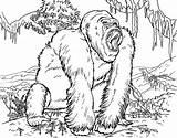 Gorilla Coloring Pages Printable Ape Animals Animal Orangutan Adult Lego Realistic Drawing Cartoon Oleh Diposting Admin Di Getcoloringpages Apes Library sketch template