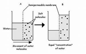 Osmosis diagrams printable diagram for Salt water diagram