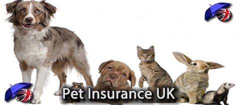 The owner, founder and chairman of the board of pet partners, john spurling, got into he launched petpartners in the uk first and then the united states in 2003. Get Pets Best Dog Insurance Reviews - Wayang Pets