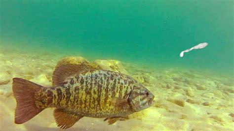 invasive species  threat   corner  bc