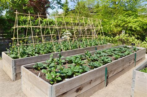 sunnyside gardens sunnyvale permaculture garden bed preparation garden ftempo