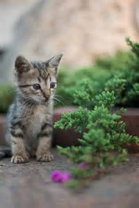 what of cats does kitten
