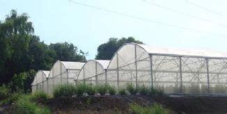 montage serre tunnel plastique best 25 serre agricole ideas on