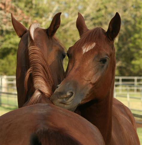 equine behavior horse understanding horses negative health interactions friendly vs