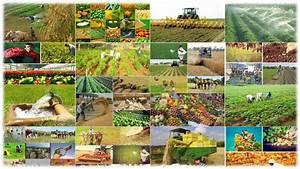 Technology soon to play a big role in agriculture in India ...