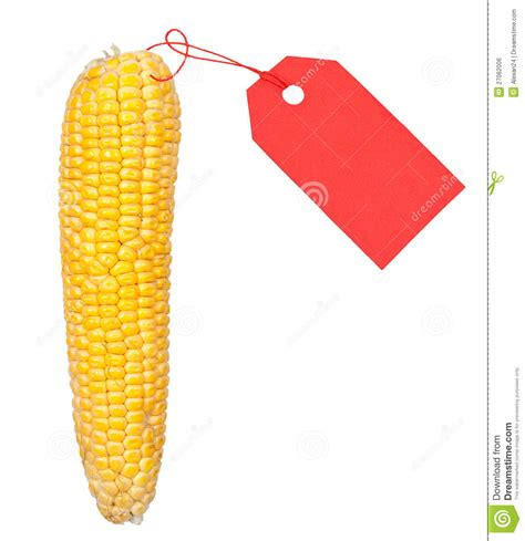 ripe ear  corn   red price tag royalty  stock