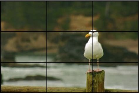photography tips rule  thirds