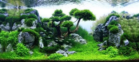 aquascape designs aquascaping styles design ideas and mistakes to avoid