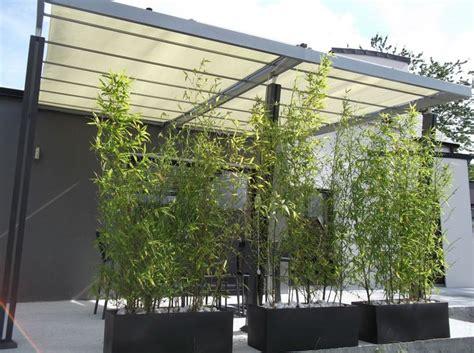 25 best ideas about bambou en pot on equisetum bac 2013 and queue de cheval originale