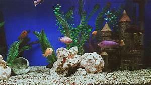 Make Your Own Aquarium Canopy