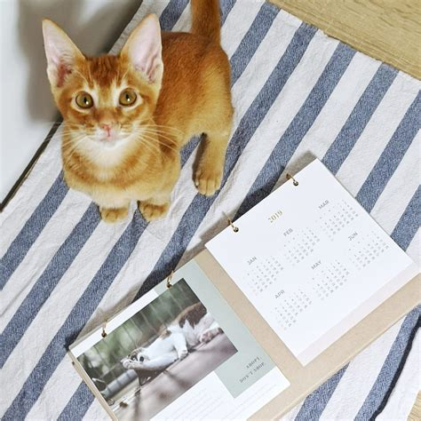 calendar distribution partners cat welfare society