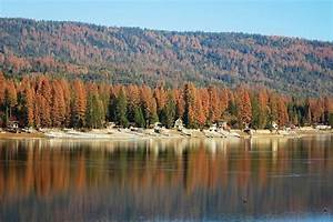 California plans to log its drought-killed trees (Forest ...
