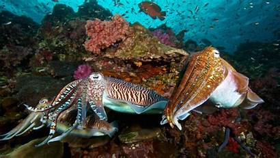Cuttlefish Facts Colorful Istock Shape Mental