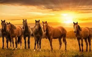 Bilder Von Pferden : die 80 besten sch ne pferde hintergrundbilder ~ Frokenaadalensverden.com Haus und Dekorationen