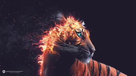 tiger fire wallpapers hd wallpapers id