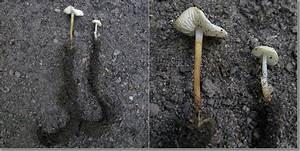 Pilze Auf Komposthaufen : trockenmumien vom pfingsten ~ Lizthompson.info Haus und Dekorationen
