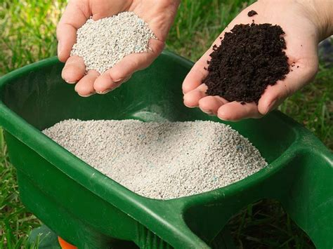 How Often Do You Need To Fertilize Your Lawn