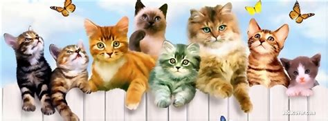 cover for cats top 5 cat and kitten timeline cover photo