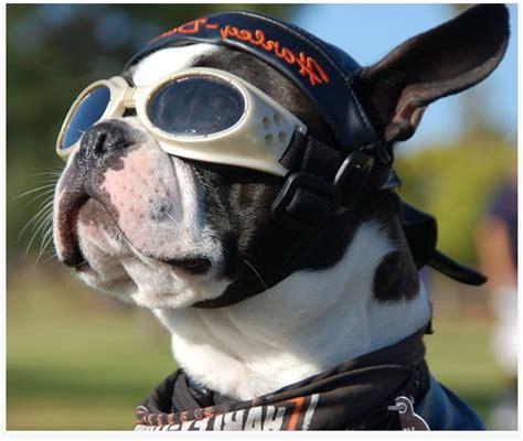 motorcycle helmets  dogs mans  friend