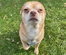 Prancer, the dog that hates men - New York Daily News