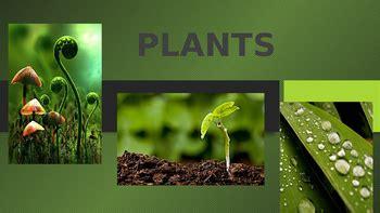plant reproduction powerpoint  glitz  glam tpt