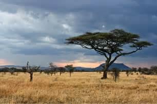 Pictures of Plain African Savanna Landforms