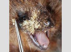 Pieks, der Igel Tierarztpraxis Dr Renate Lorenz