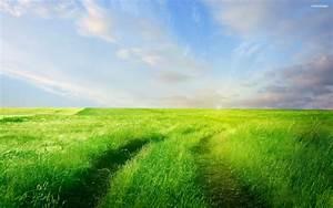 Tall Grass Field Wallpaper | www.imgkid.com - The Image ...