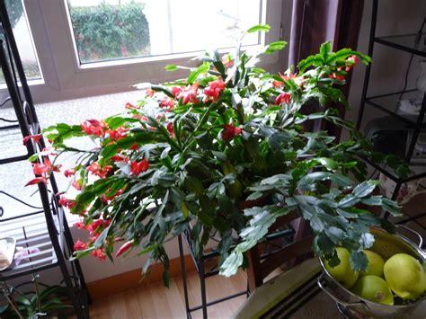 cactus de no 235 l bien entretenu c 244 t 233 jardin