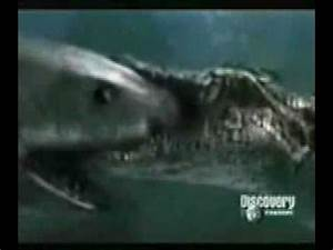On Animal Face-Off, saltwater crocodile vs. great white ...